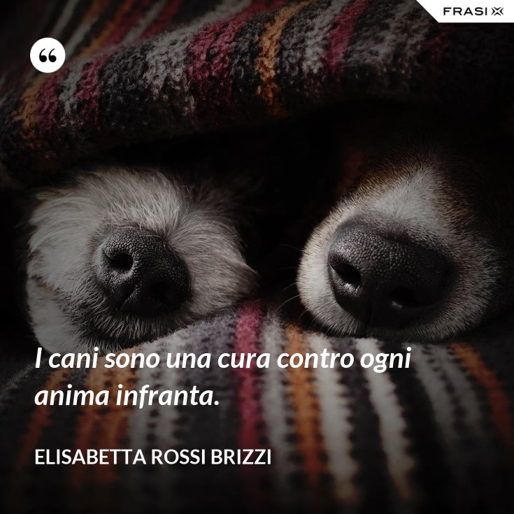 I cani sono una cura contro ogni anima infranta.