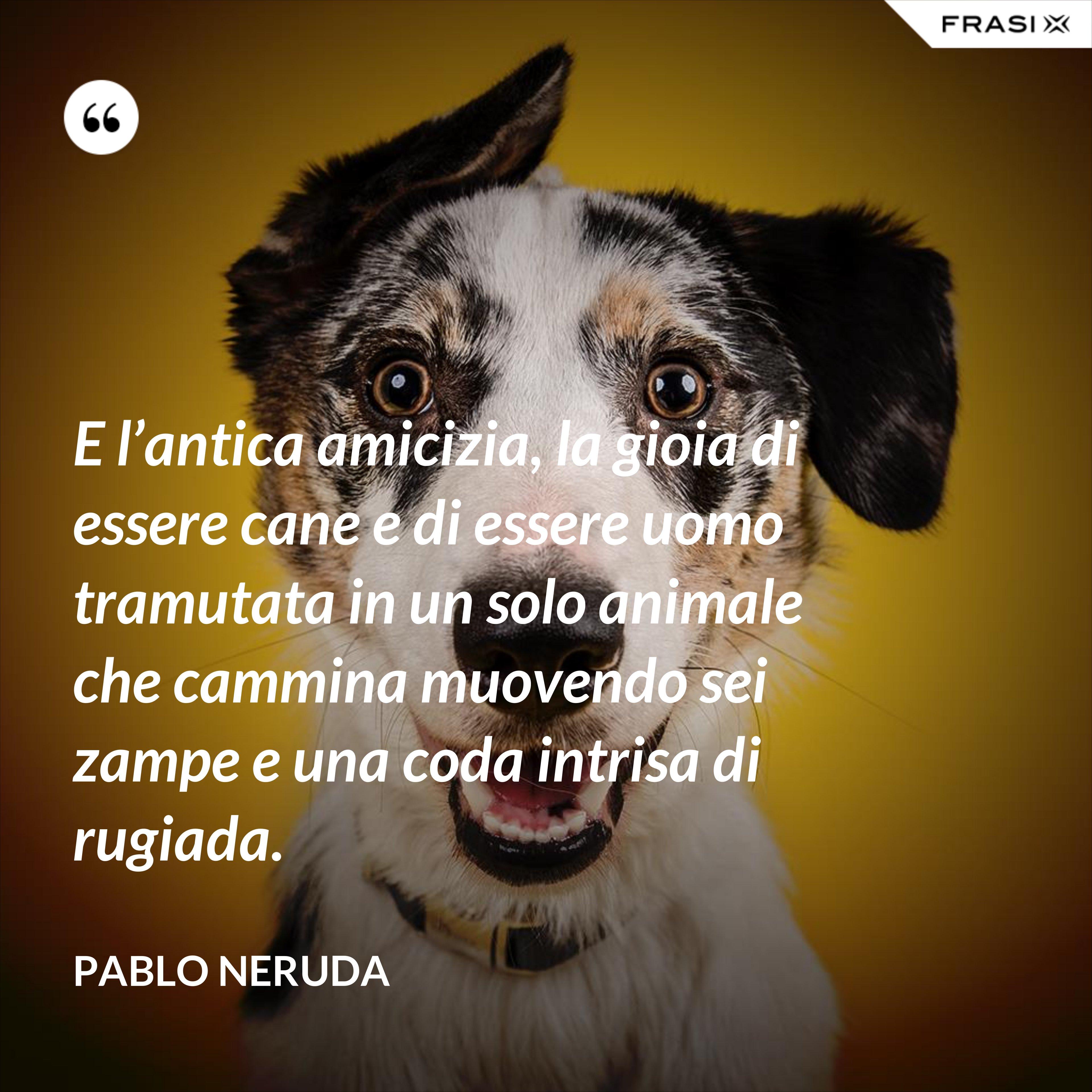 E l'antica amicizia, la gioia di essere cane e di essere uomo tramutata in un solo animale che cammina muovendo sei zampe e una coda intrisa di rugiada. - Pablo Neruda