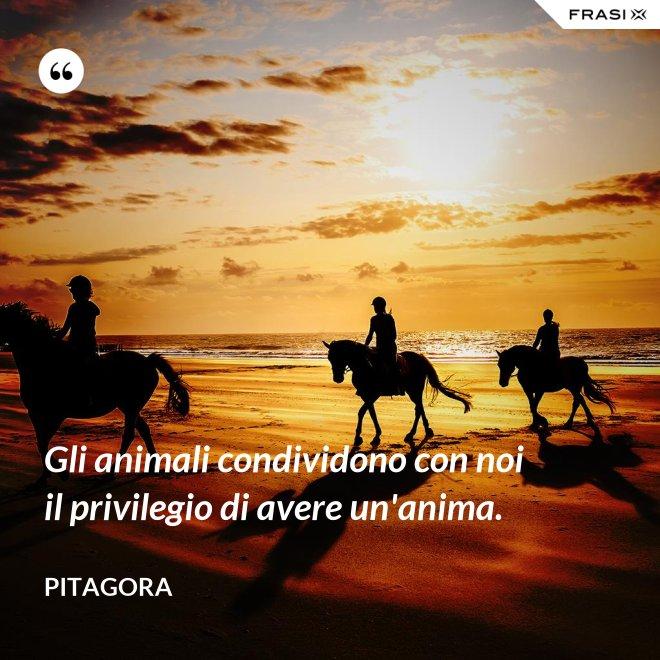 Gli animali condividono con noi il privilegio di avere un'anima. - Pitagora