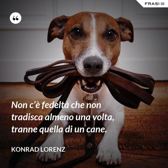 Non c'è fedeltà che non tradisca almeno una volta, tranne quella di un cane. - Konrad Lorenz