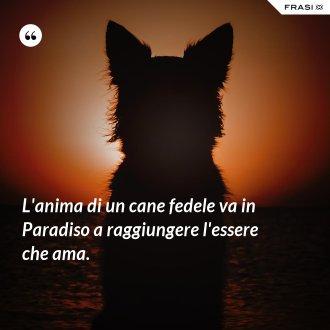 L'anima di un cane fedele va in Paradiso a raggiungere l'essere che ama.