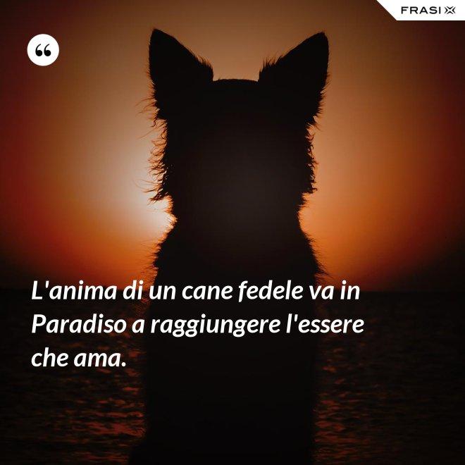 L'anima di un cane fedele va in Paradiso a raggiungere l'essere che ama. - Anonimo