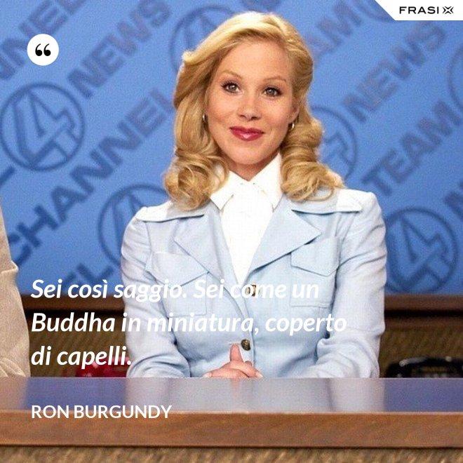 Sei così saggio. Sei come un Buddha in miniatura, coperto di capelli. - Ron Burgundy