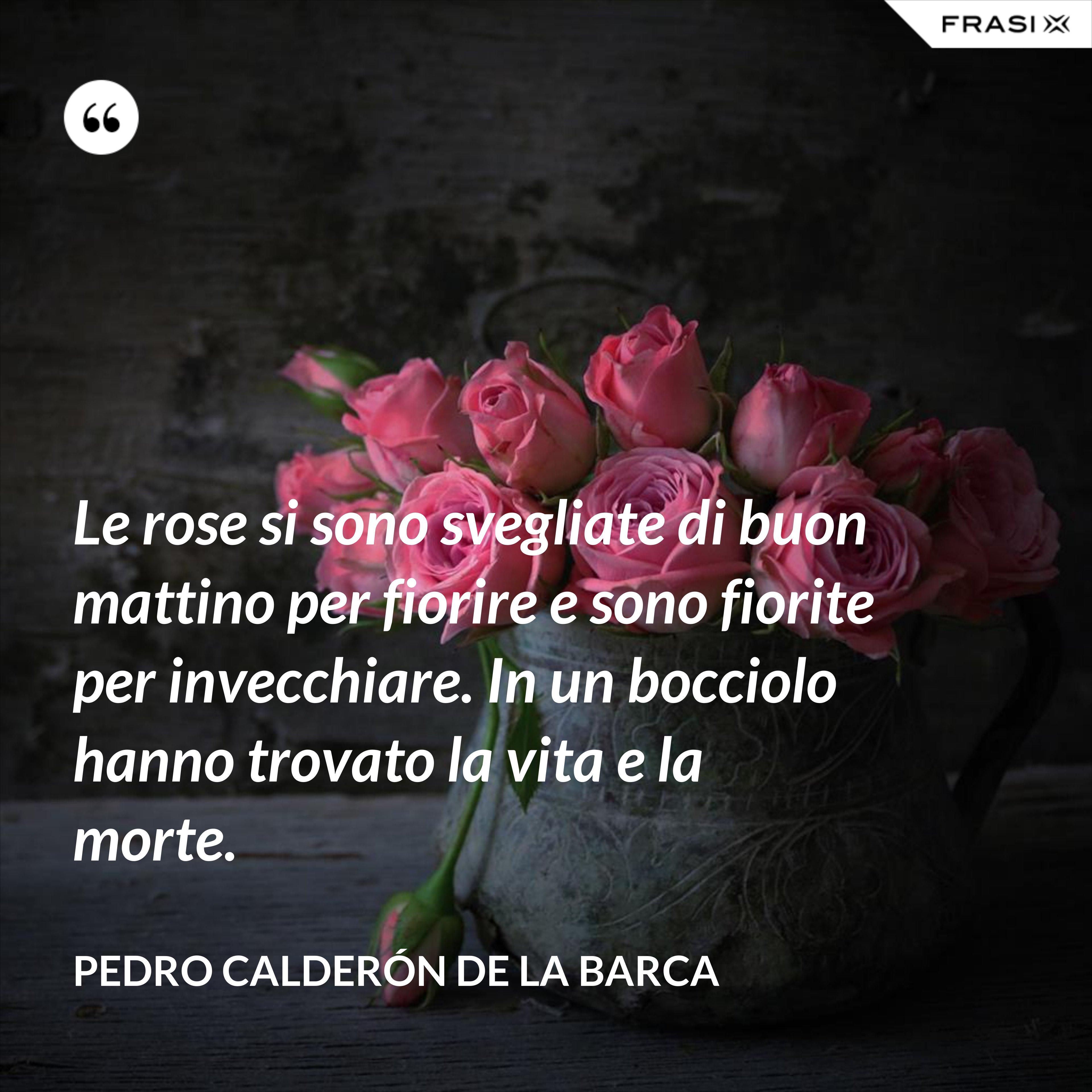 Le rose si sono svegliate di buon mattino per fiorire e sono fiorite per invecchiare. In un bocciolo hanno trovato la vita e la morte. - Pedro Calderón de la Barca