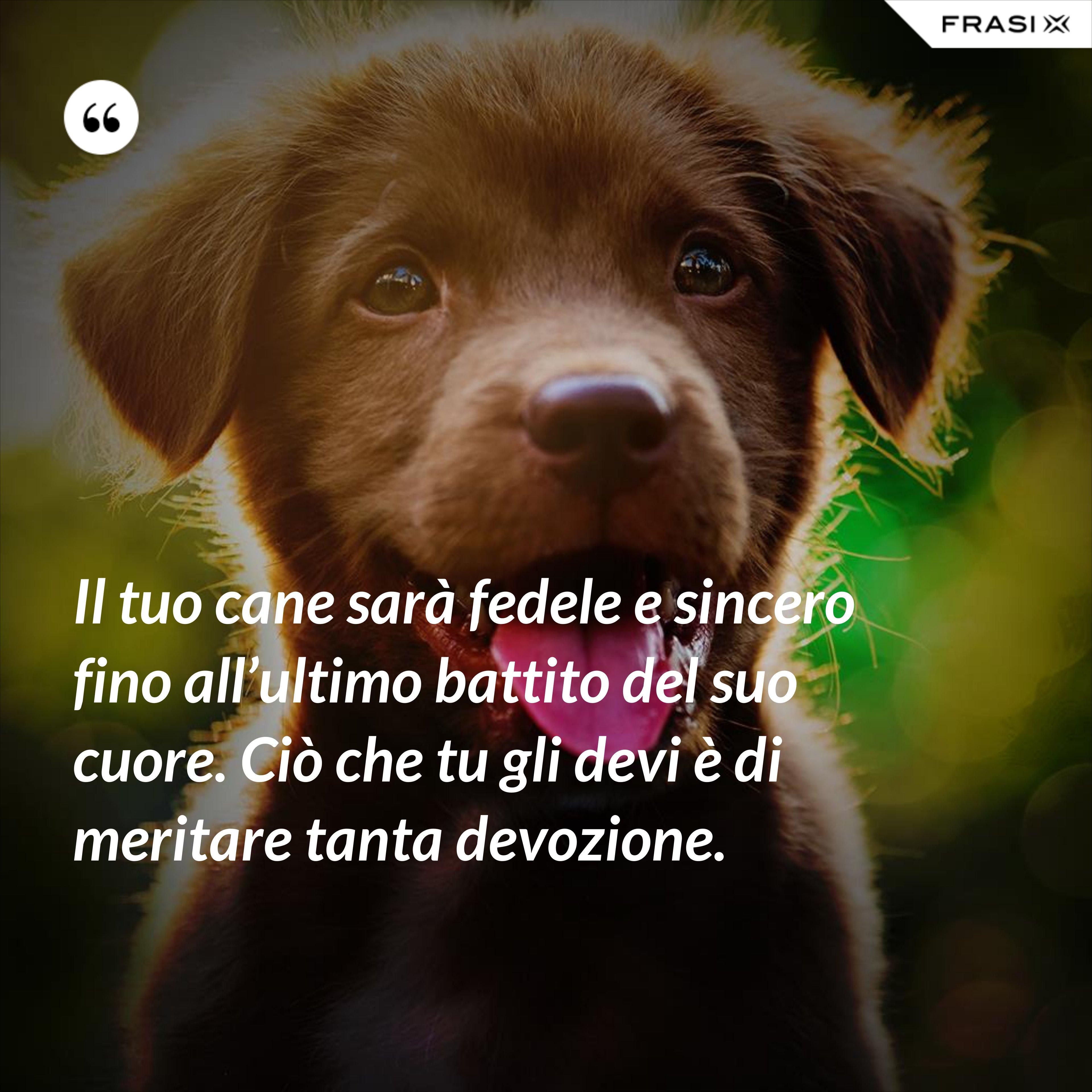 Il tuo cane sarà fedele e sincero fino all'ultimo battito del suo cuore. Ciò che tu gli devi è di meritare tanta devozione. - Anonimo