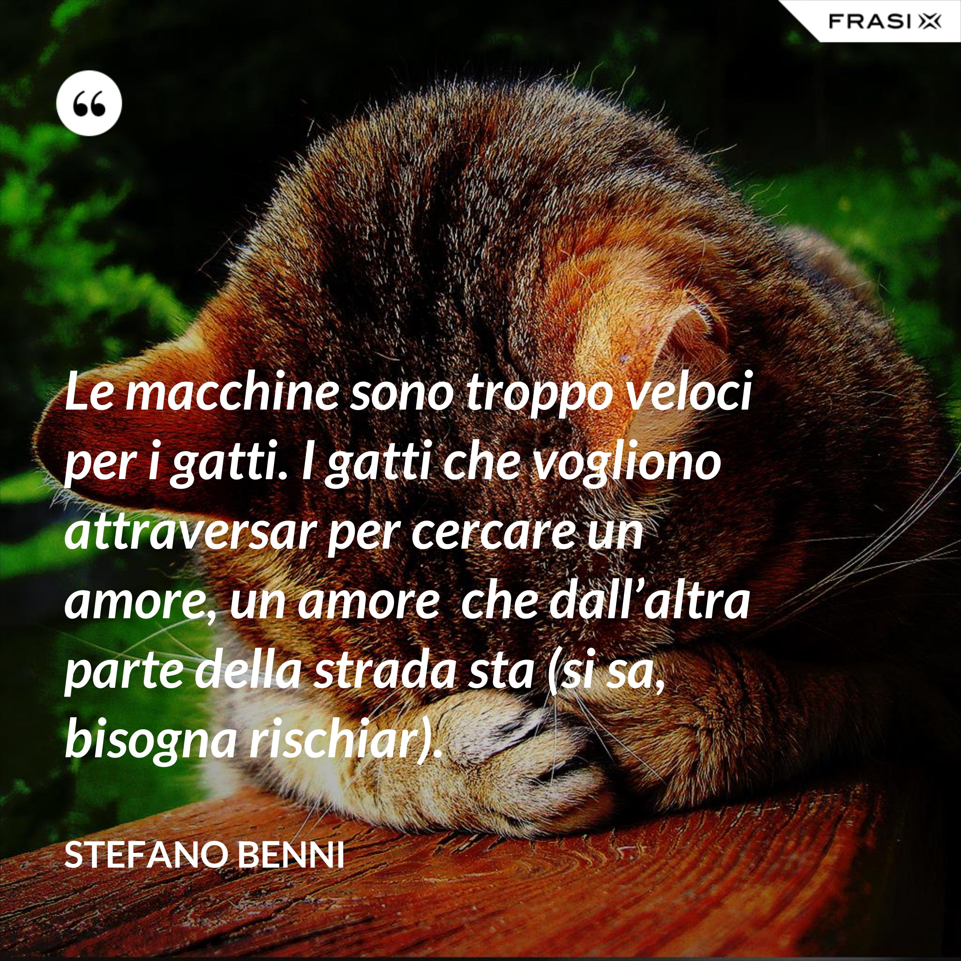 Le macchine sono troppo veloci per i gatti. I gatti che vogliono attraversar per cercare un amore, un amore  che dall'altra parte della strada sta (si sa, bisogna rischiar). - Stefano Benni