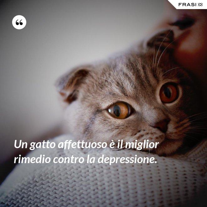 Un gatto affettuoso è il miglior rimedio contro la depressione. - Anonimo