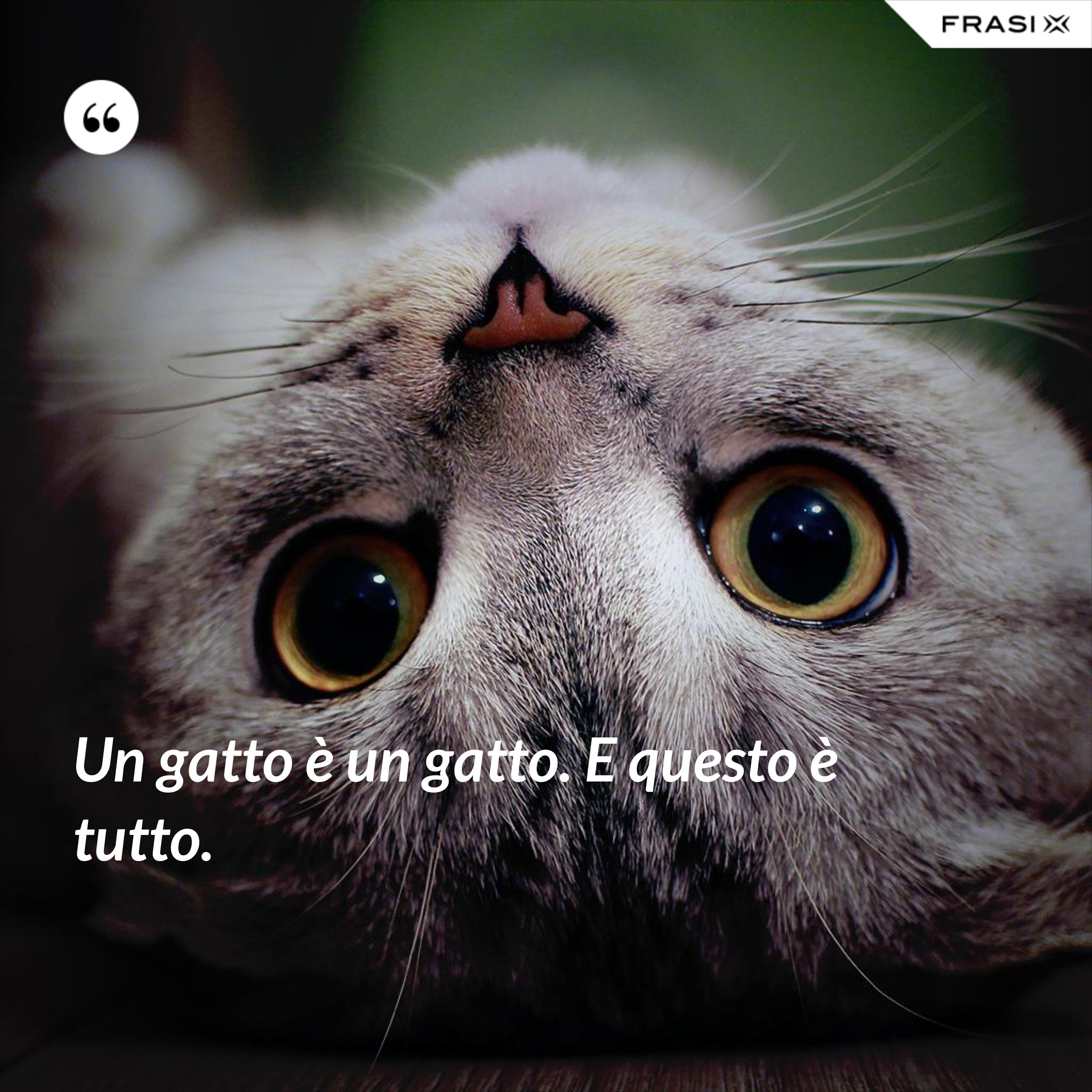 Un gatto è un gatto. E questo è tutto. - Anonimo
